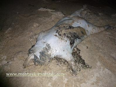 The-Montauk-Monster_1_defaultbody