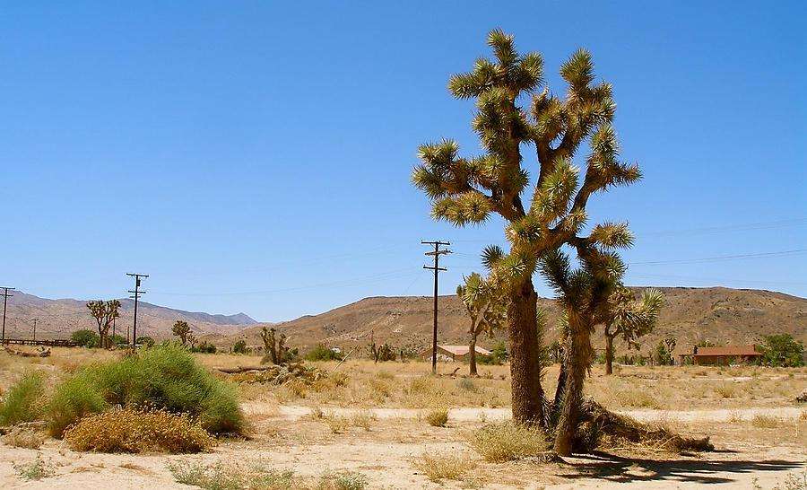 Le-Desert_3_defaultbody