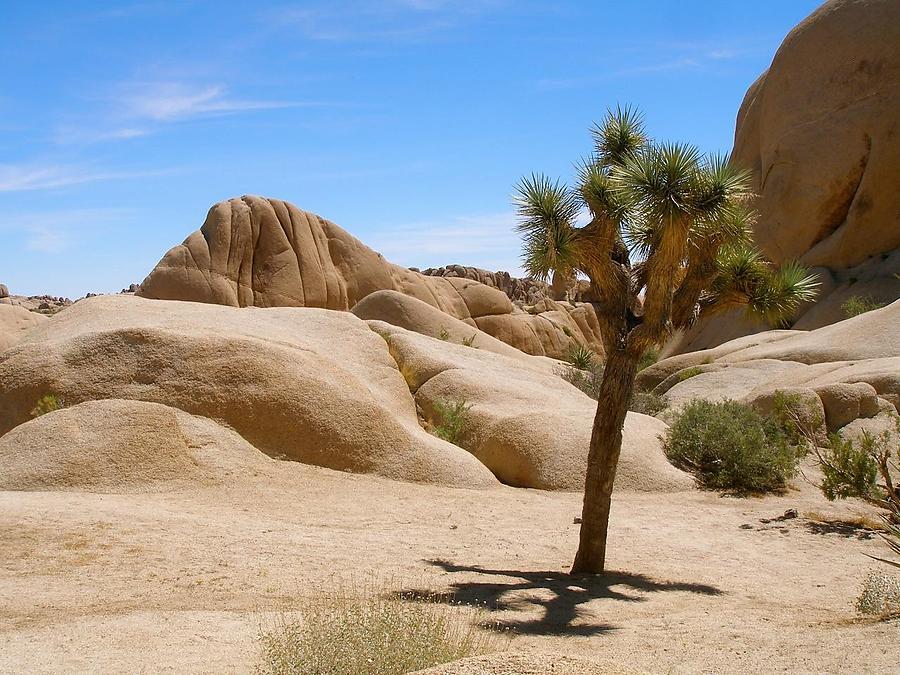 Le-Desert-2_4_defaultbody