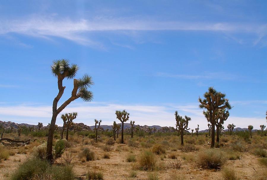Le-Desert-2_defaultbody