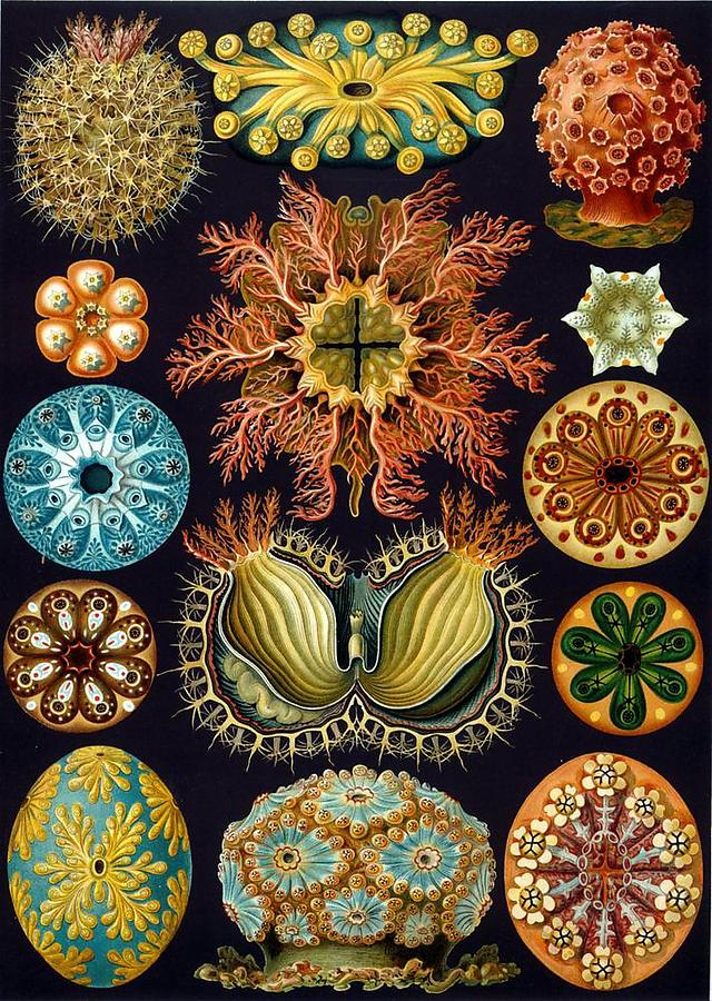 Ernst-Haeckel_1_defaultbody
