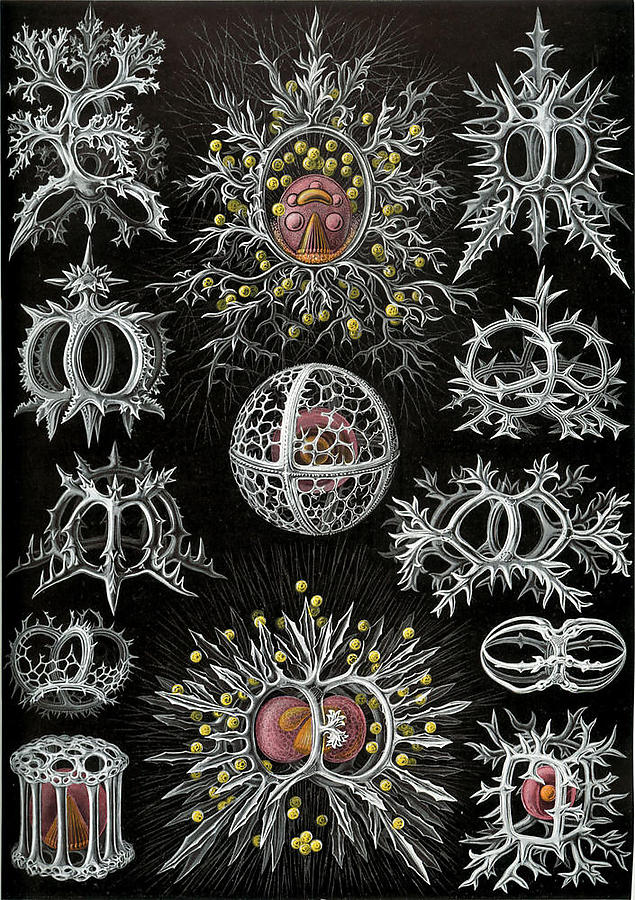 Ernst-Haeckel_3_defaultbody