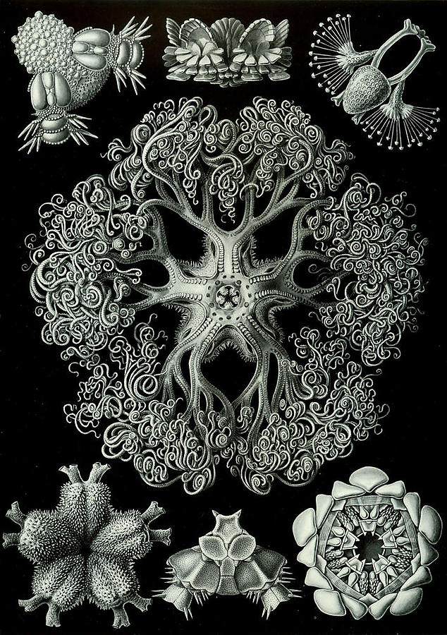 Ernst-Haeckel_defaultbody