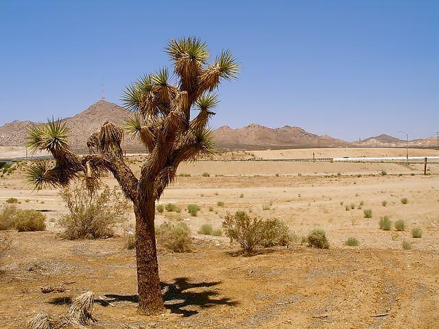 Desert_3_defaultbody